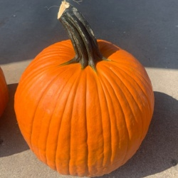 Pumpkin, XL Jack-O'-Lantern - LOCAL